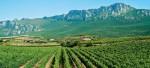 vitigni a La Rioja.jpg