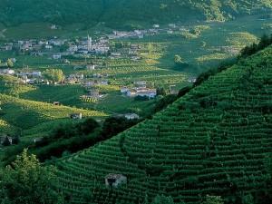 Altamarca_le colline ricamate dai vigneti