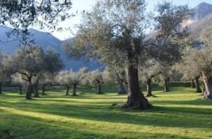 Uno scorcio del Parco degli Olivi a Venafro